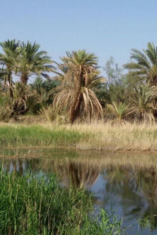 کویر رویایی مصر