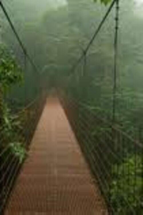 تور ریلکسی و یوگا در جنگل ابر