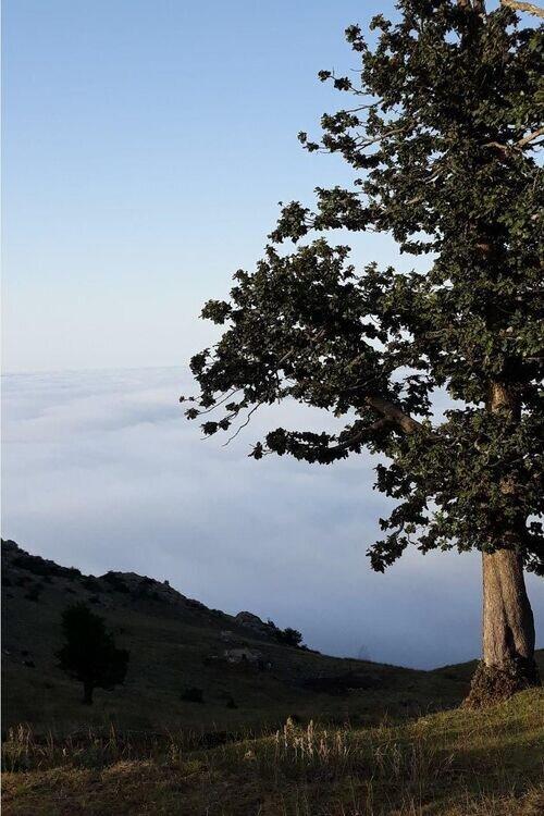 تور جنگل ابر2روزه