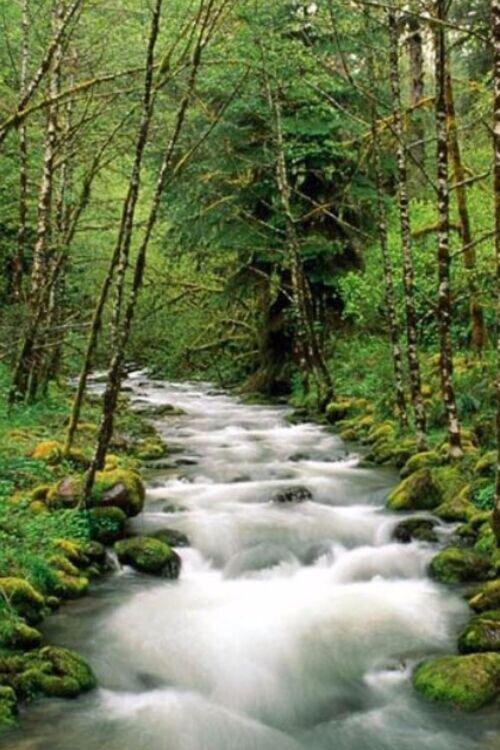 پیک نیک در روستا و جنگل فوشه