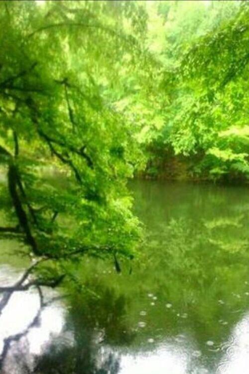 تاپ تور دریاچه فراخین