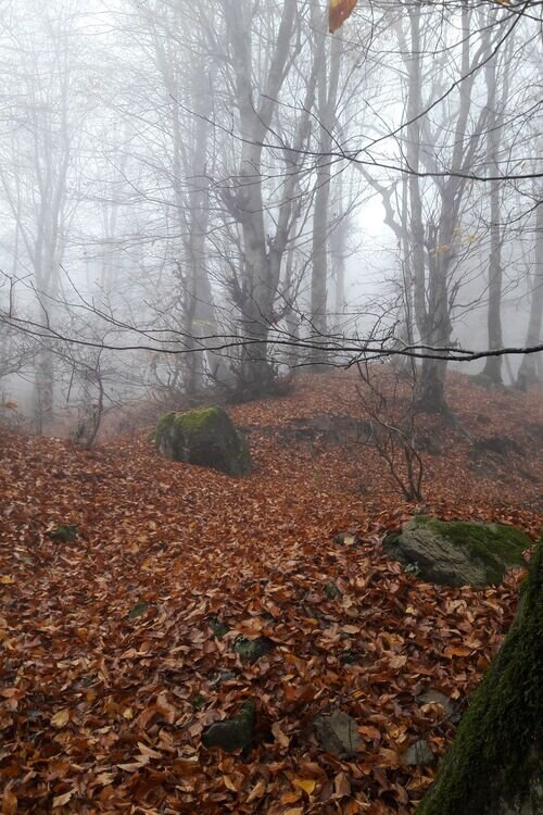 درفک  پاییزی (در برگها غرق شوید!)