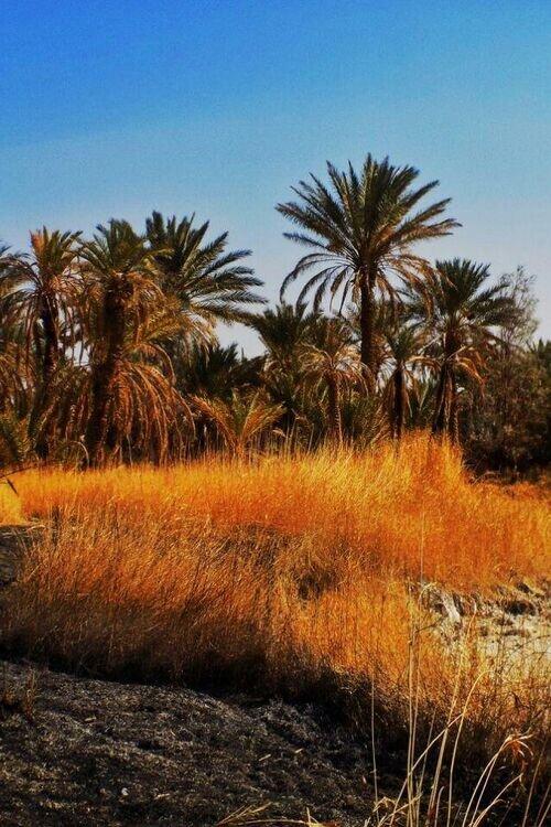 تور کویر مصر زمستان 97