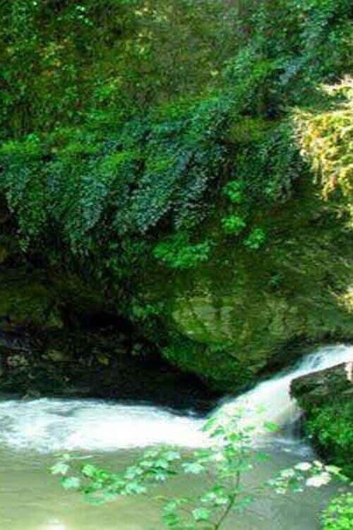 تور پلنگ دره