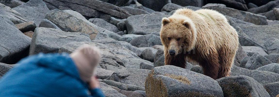 هنگام مواجهه با حیوانات وحشی در طبیعت چکار کنیم؟